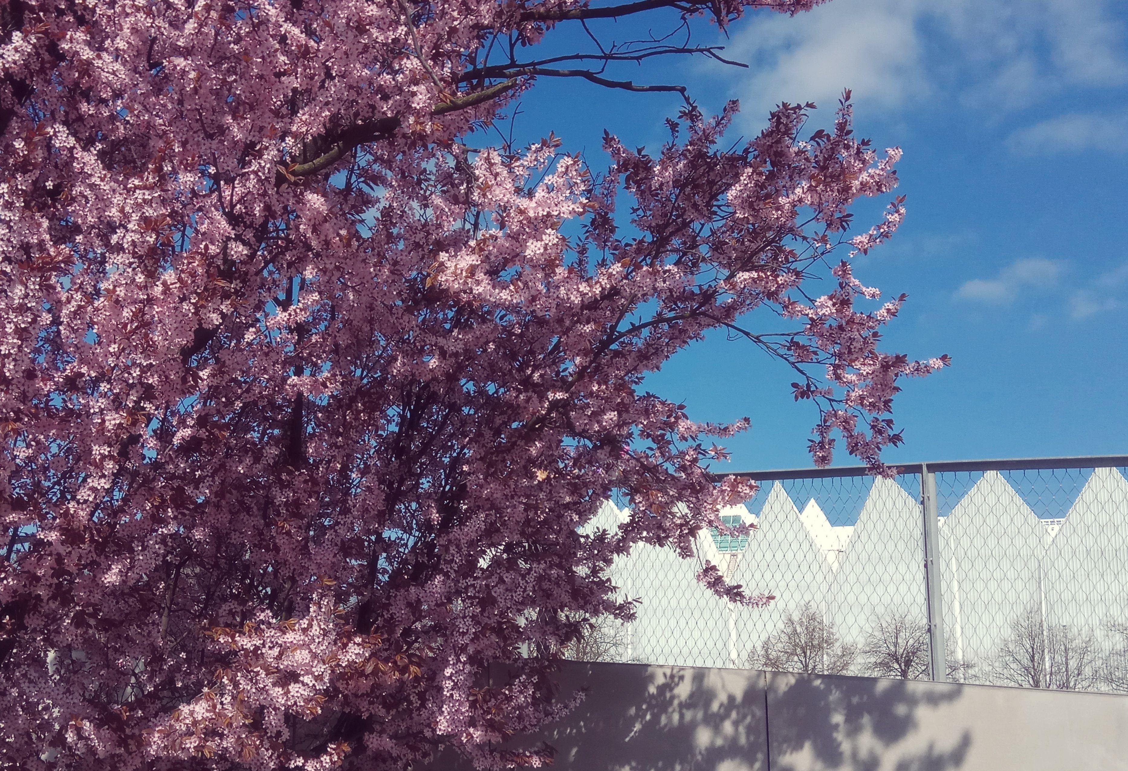 kwiecień szczecin filharmonia kwiaty