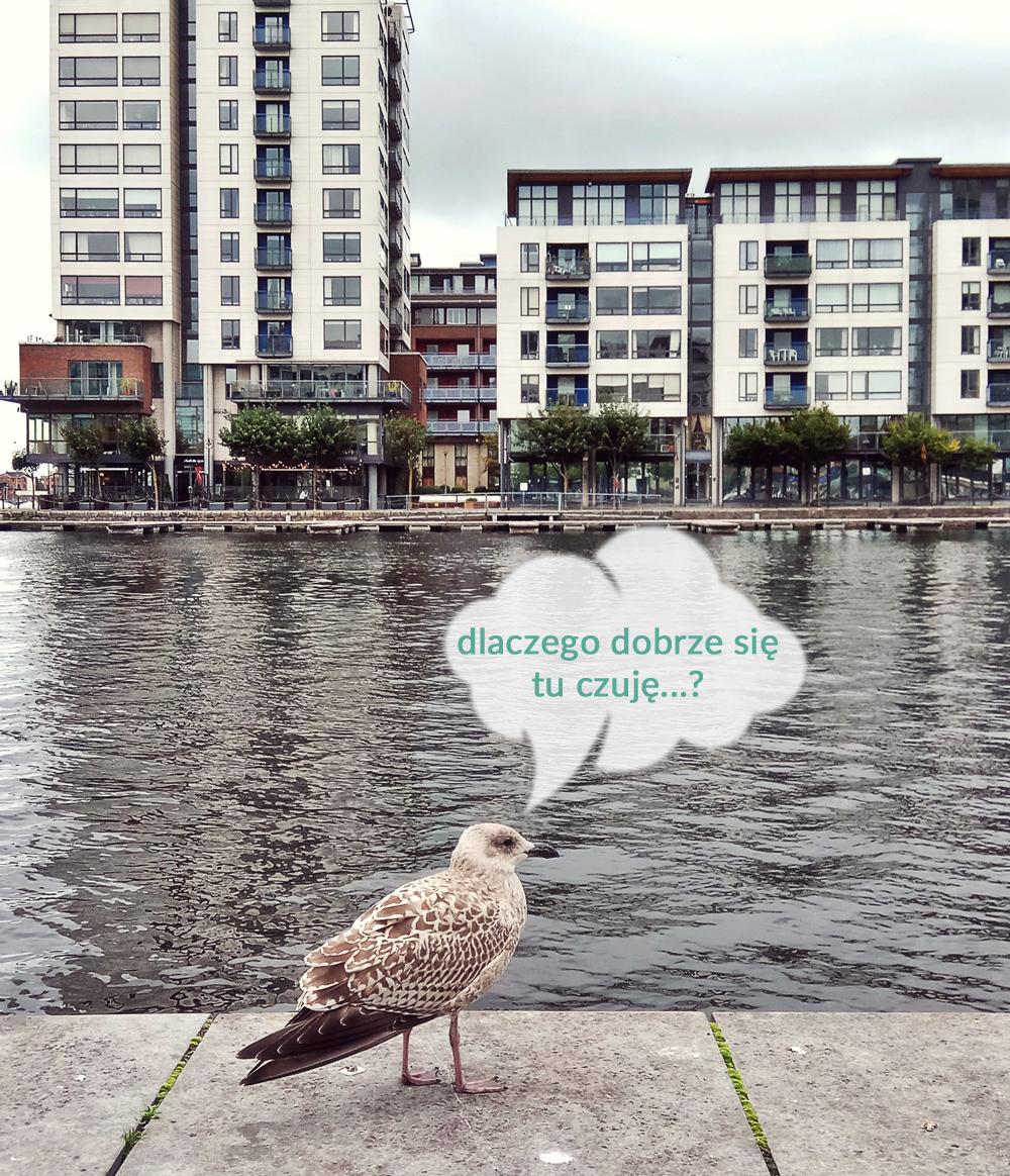 Elementy dobrej przestrzeni na przykładzie Dublina