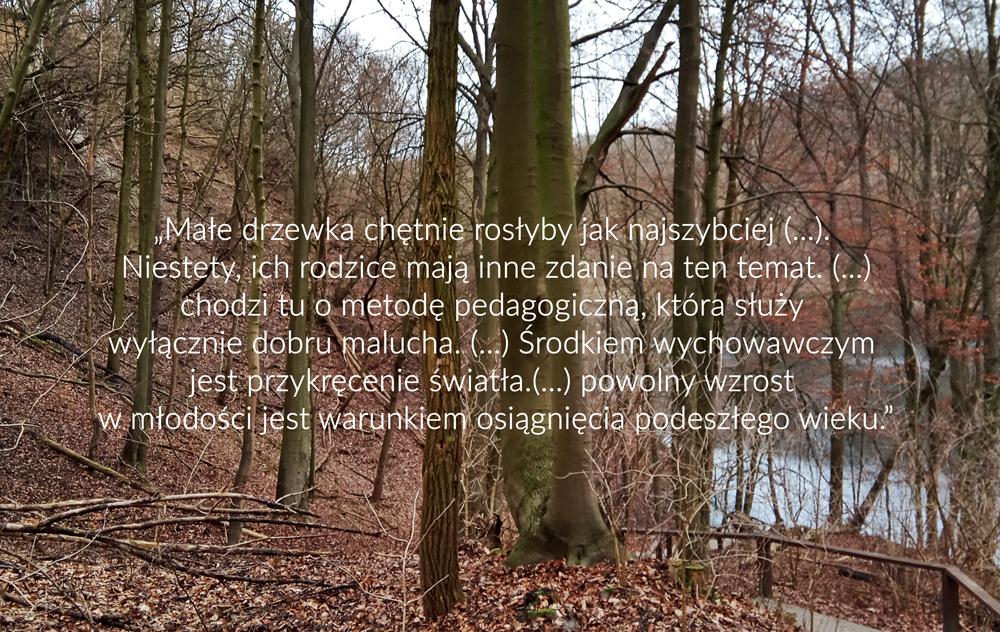 cytat sekretne zycie drzew książka peter wohlleben