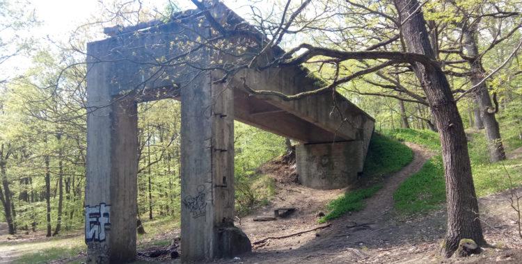 mosty puszcza bukowa